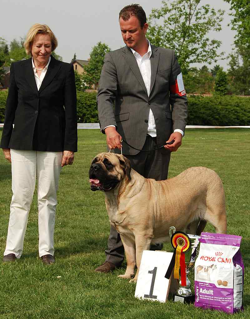 33 Ch. Pearl of Mountainous Mastiff's